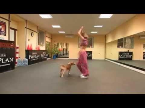 Bellydancing Pitbull (Dog/perro) Things that I like
