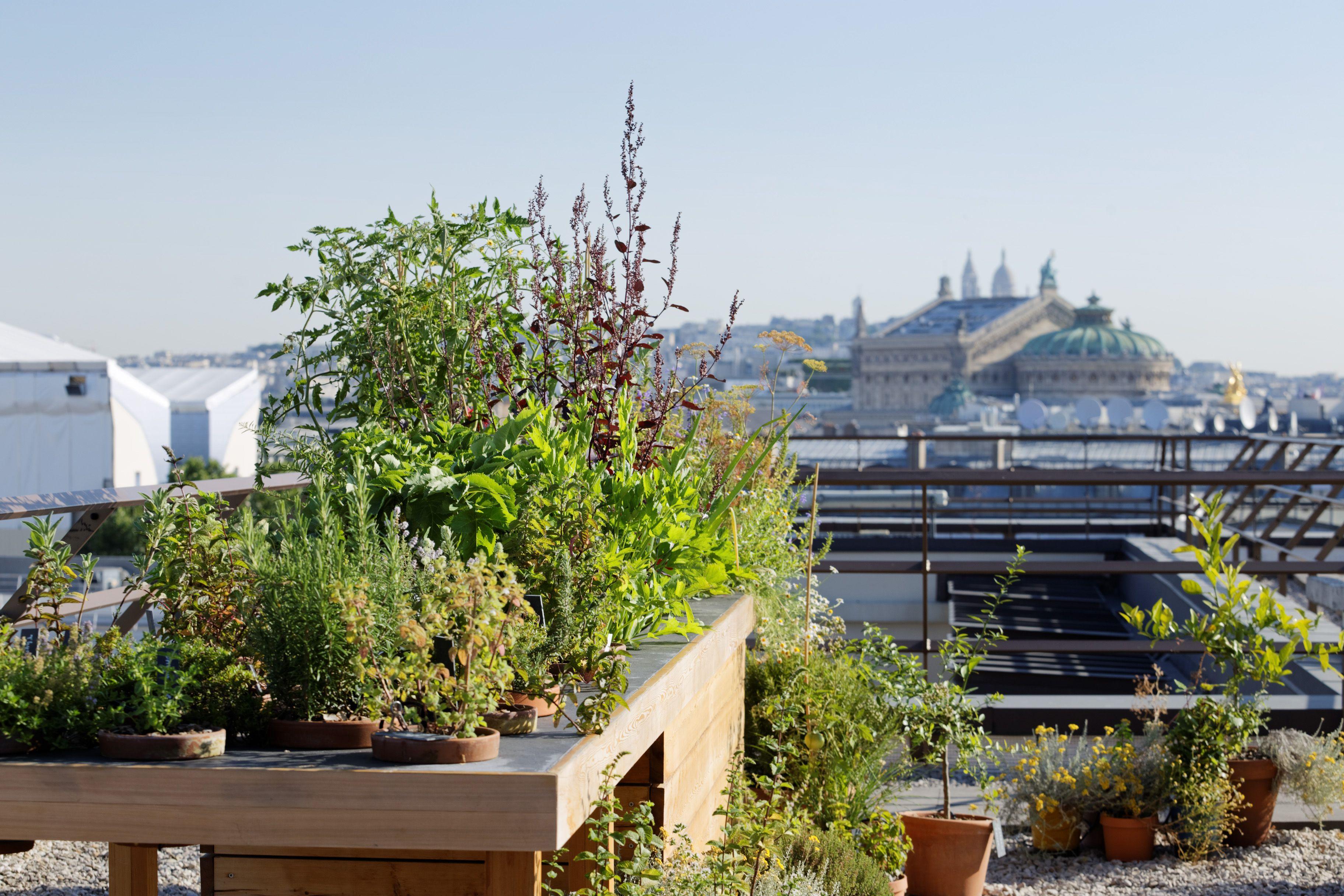Jardins Terrasses Rooftop Hotel Mandarin Oriental Paris Concepteur Paysagiste Christophe Gautrand Palace Luxe M Fleurs Comestibles Paysagiste Jardins