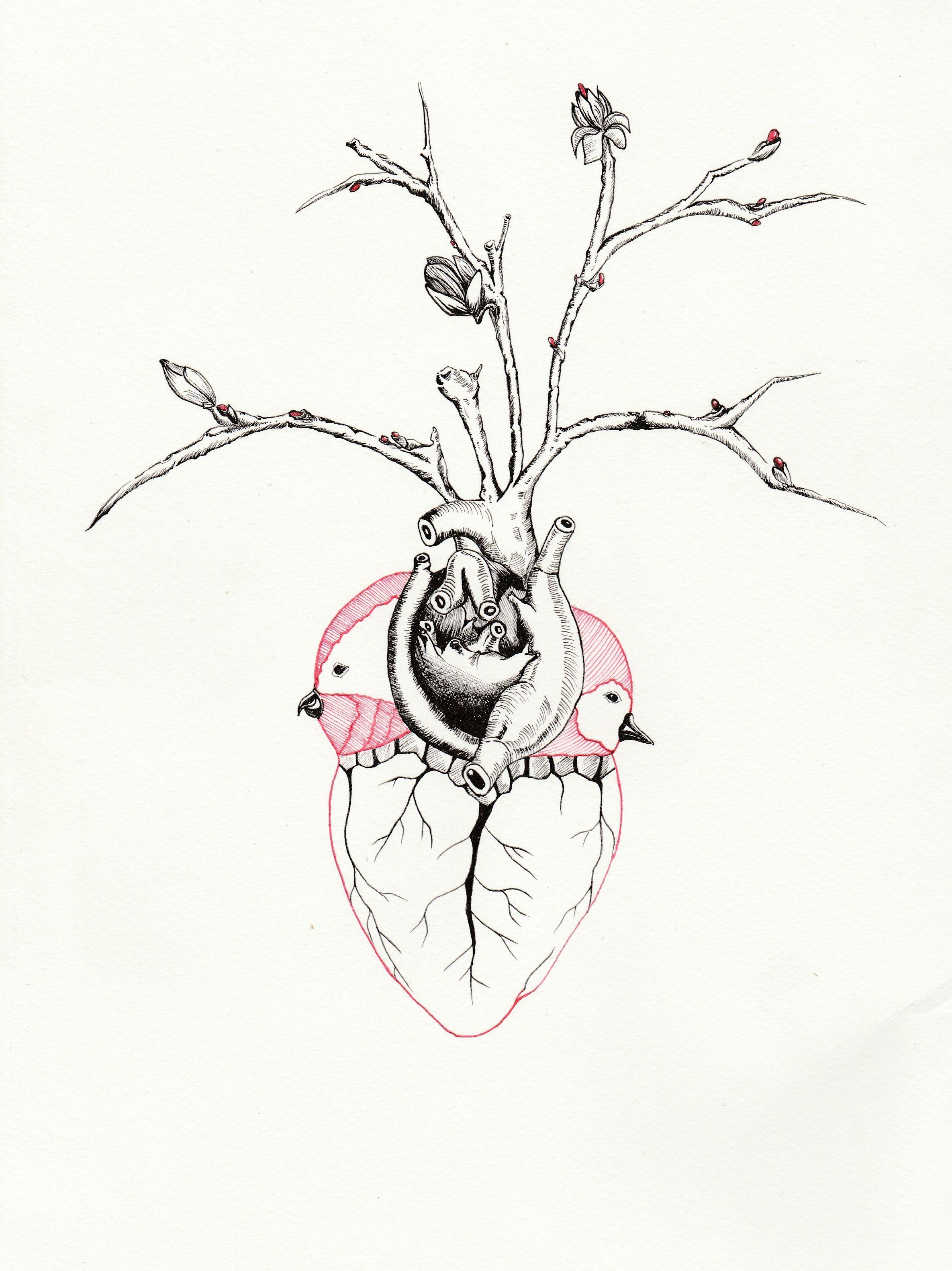 El #Corazón en los seres humanos representa, solo un pedazo de carne ...