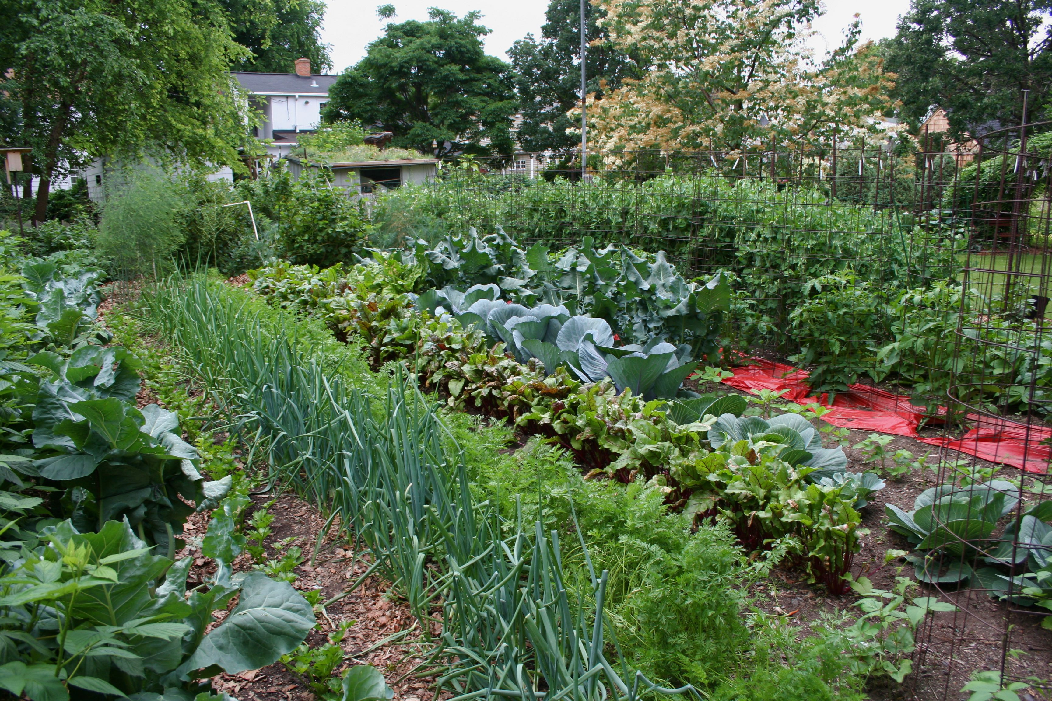 How Much Green Can Growing A Vegetable Garden Save You 640 x 480