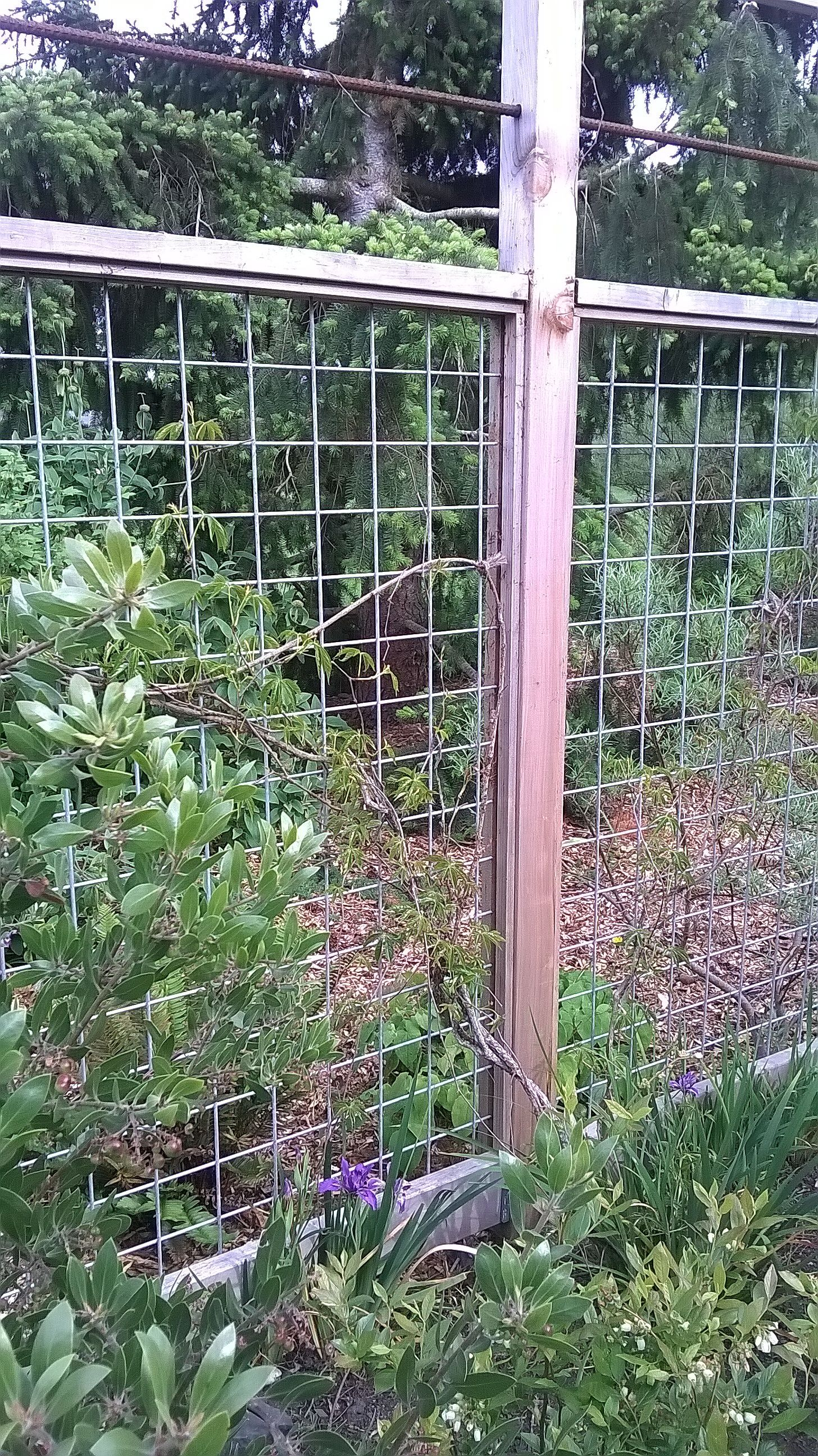 Fence To Protect Garden From Deer Port Townsend Wa