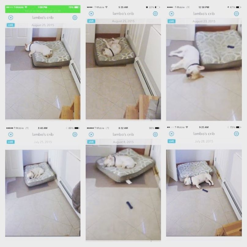 17 Weird Things Dogs Do When You Re Not Home Caught On Pet Cam Pet Cam Dogs Pets