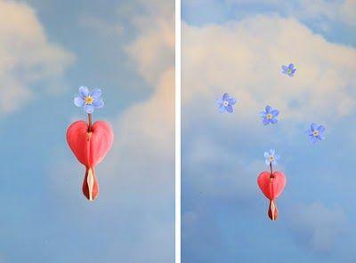 The Studio Garden: Forget-me-not & Bleeding hearts