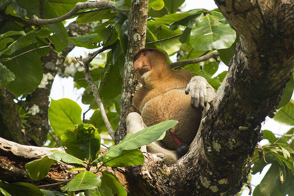 Lust auf Dschungel-Abendteuer? Dann komm mit uns in den Bako-Nationalpark