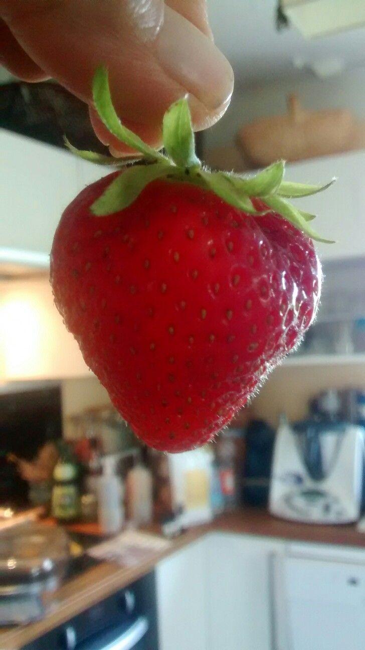 The big one ! Fraisier installé il y a juste deux mois en carré bartholomew et deja des fraises incroyables