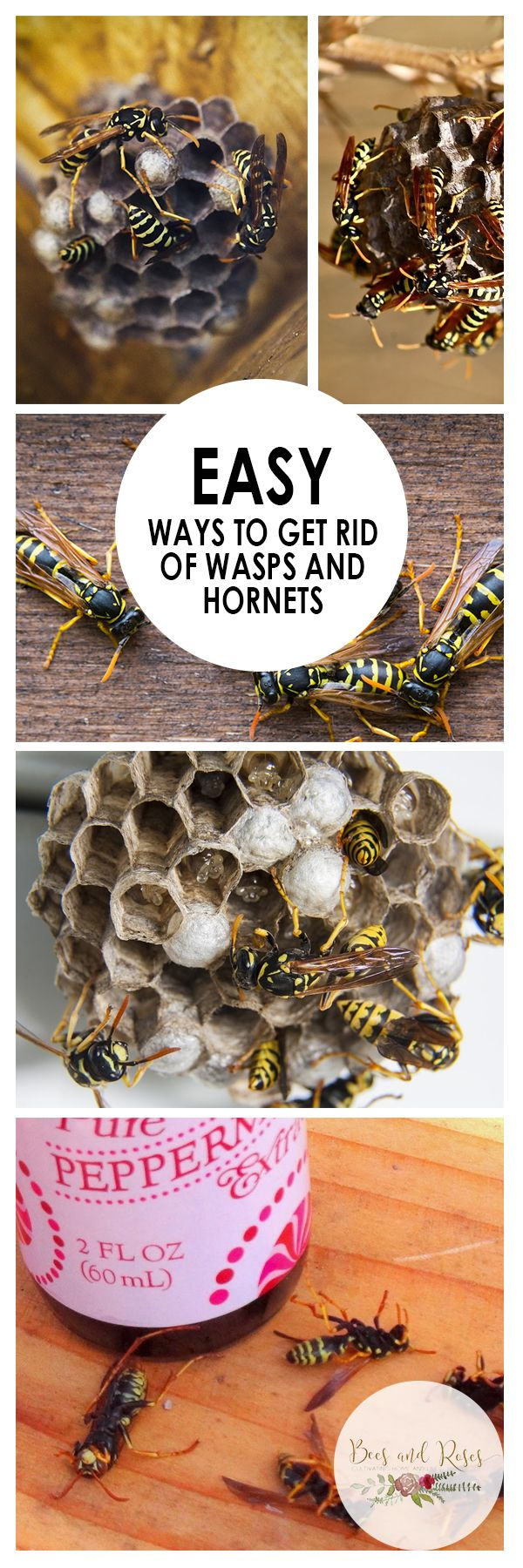 Wasp Repellent: Natural, DIY, How To Get Rid, Bee And ...