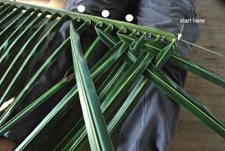 Quot How To Weave A Thatch Roof From Coconut Palm Fronds Quot Now