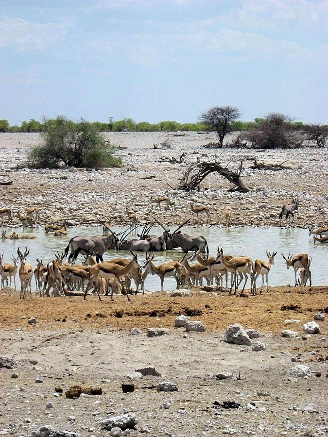 Namibia Etosha National Park 0120 Namibia Desert Kruger