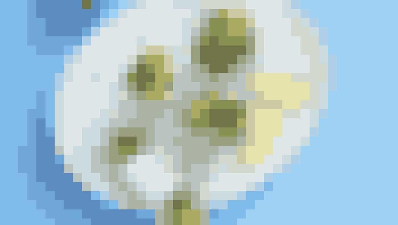 Femina - andebryst #andebrystopskrift Andebryst året rundt - find lækre opskrifter lige her! #andebrystopskrift Femina - andebryst #andebrystopskrift Andebryst året rundt - find lækre opskrifter lige her!