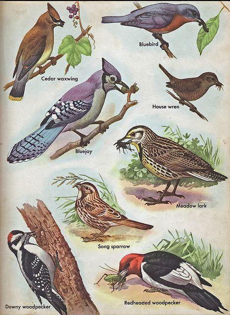 Common North American Birds