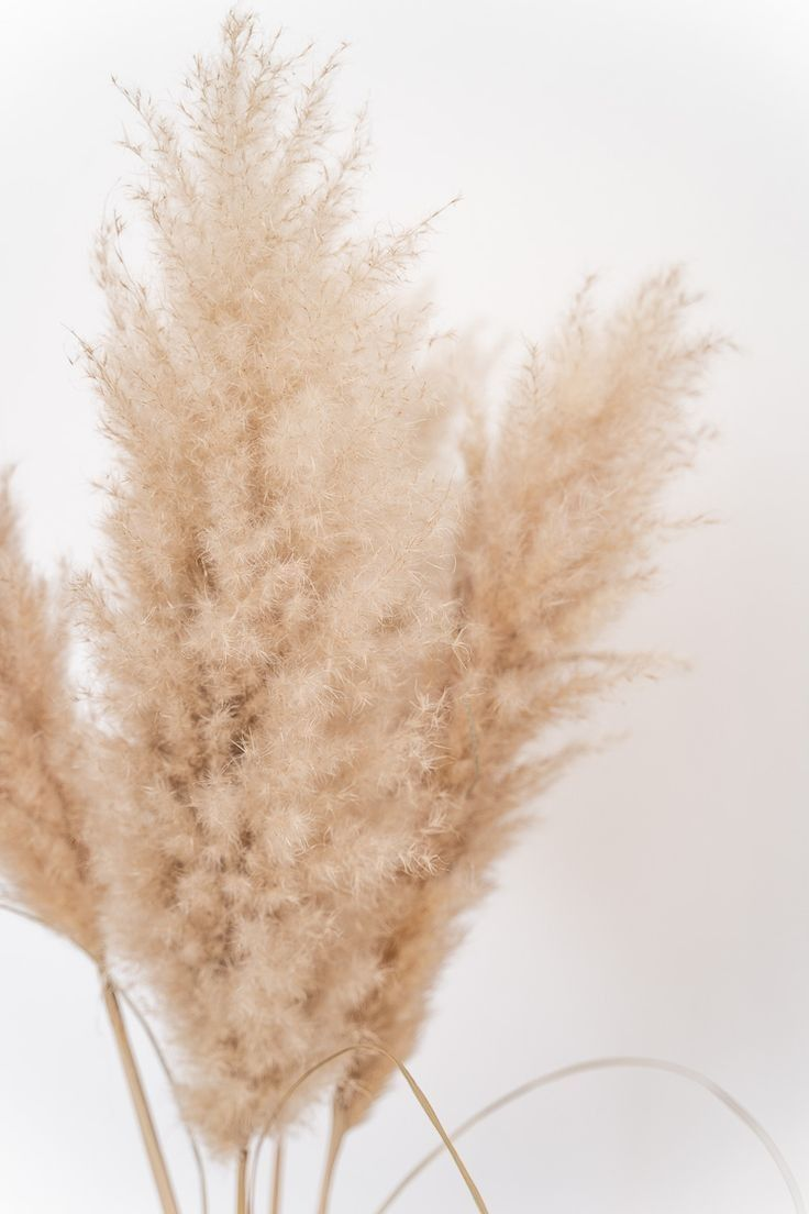 Pin by Stefanie Bergen on idia   Grass wallpaper, Dried flowers ...