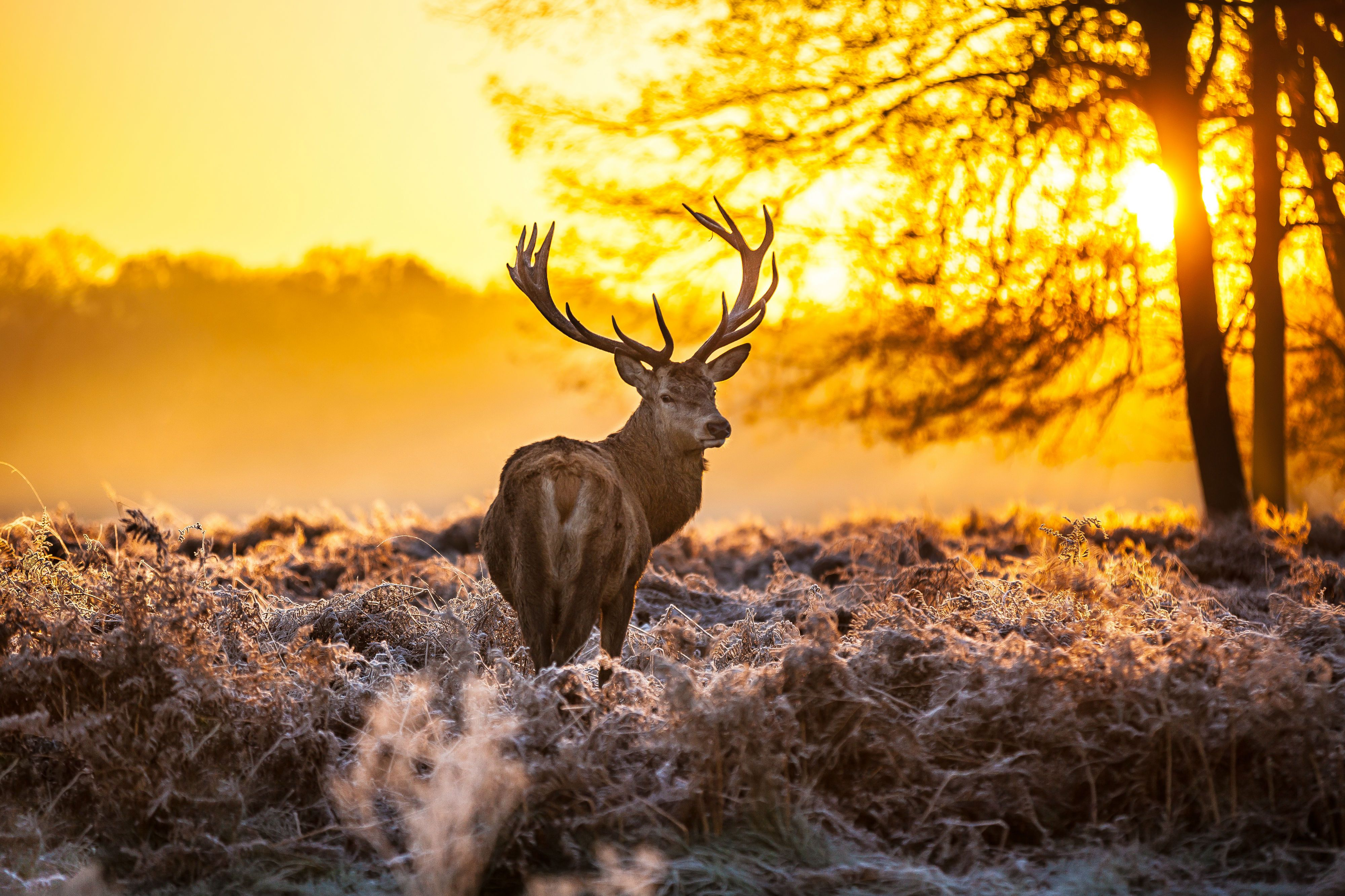 Get Back To Nature With A Stroll Through Idyllic Richmond Park Forest Art Autumn Scenes Framed Art Prints
