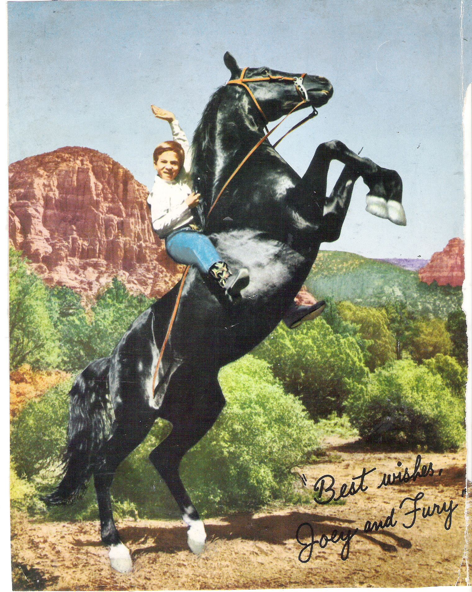 Fury Pferd