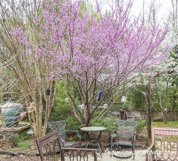 Best Backyard Trees (To Provide Shade And Privacy For A