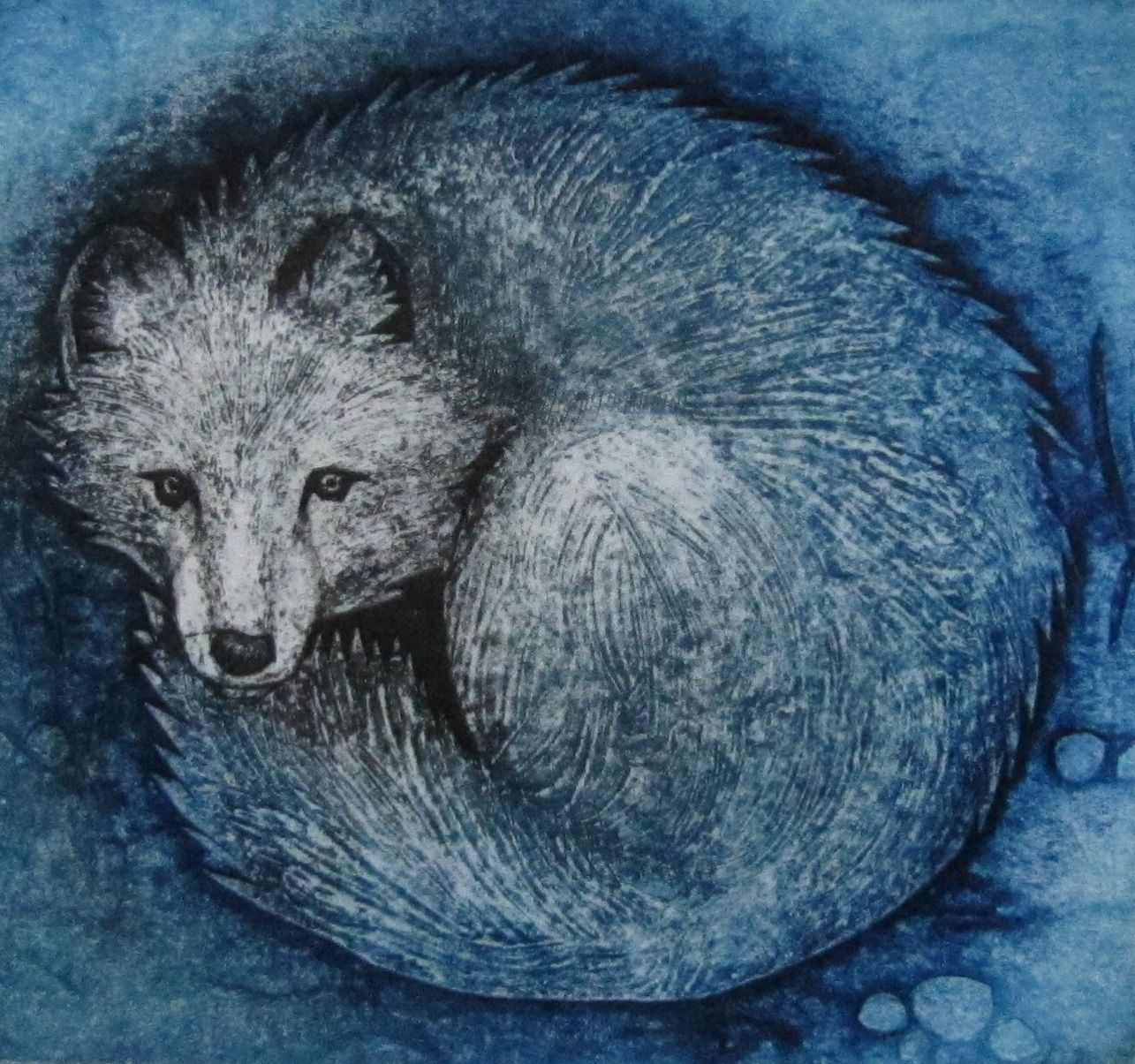 Snow Fox an original limited edition collagraph by Hester Cox
