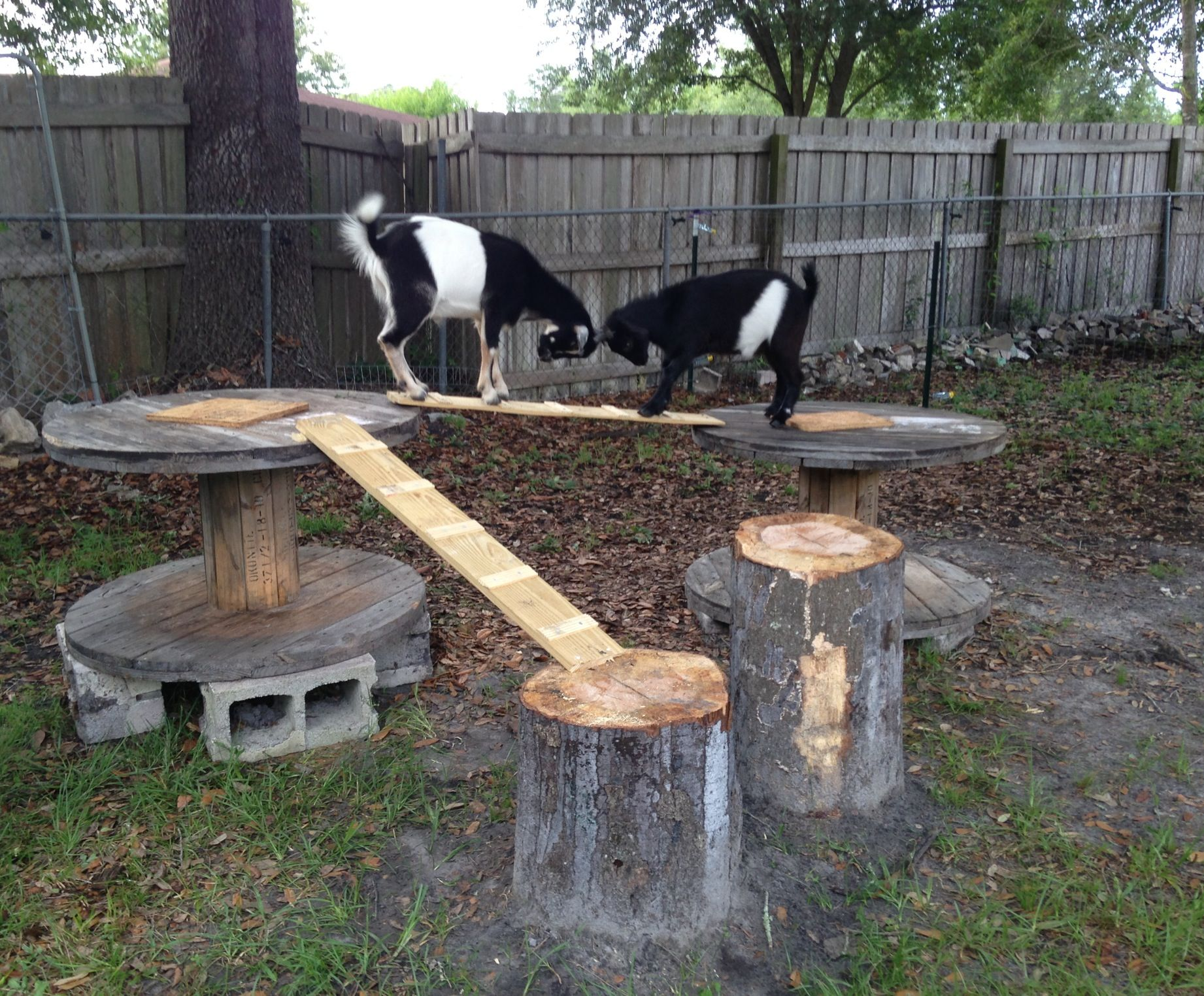 goat playground made from logs wire spools and scrap wood pet