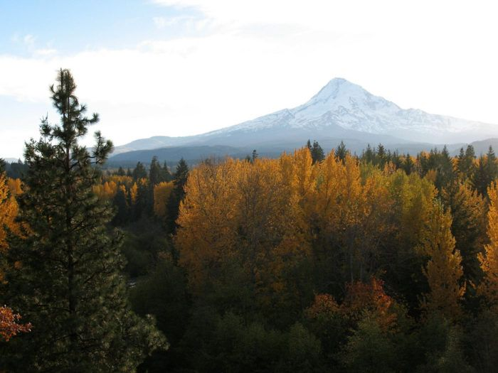 These 8 Country Roads In Oregon Are Perfect For A Scenic Fall Drive