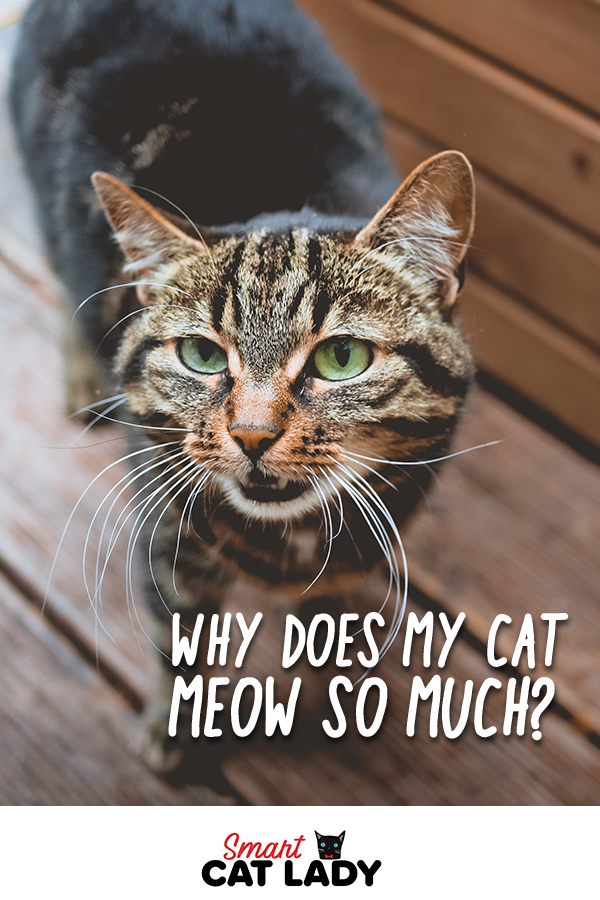The Cat S Meow Do You Know Why Cats Meow Beautiful Cats Cute