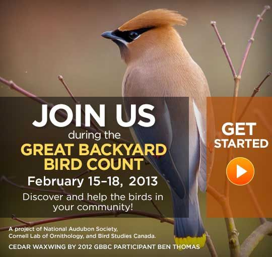 It's time for the Great Backyard Bird Count. Starts on ...