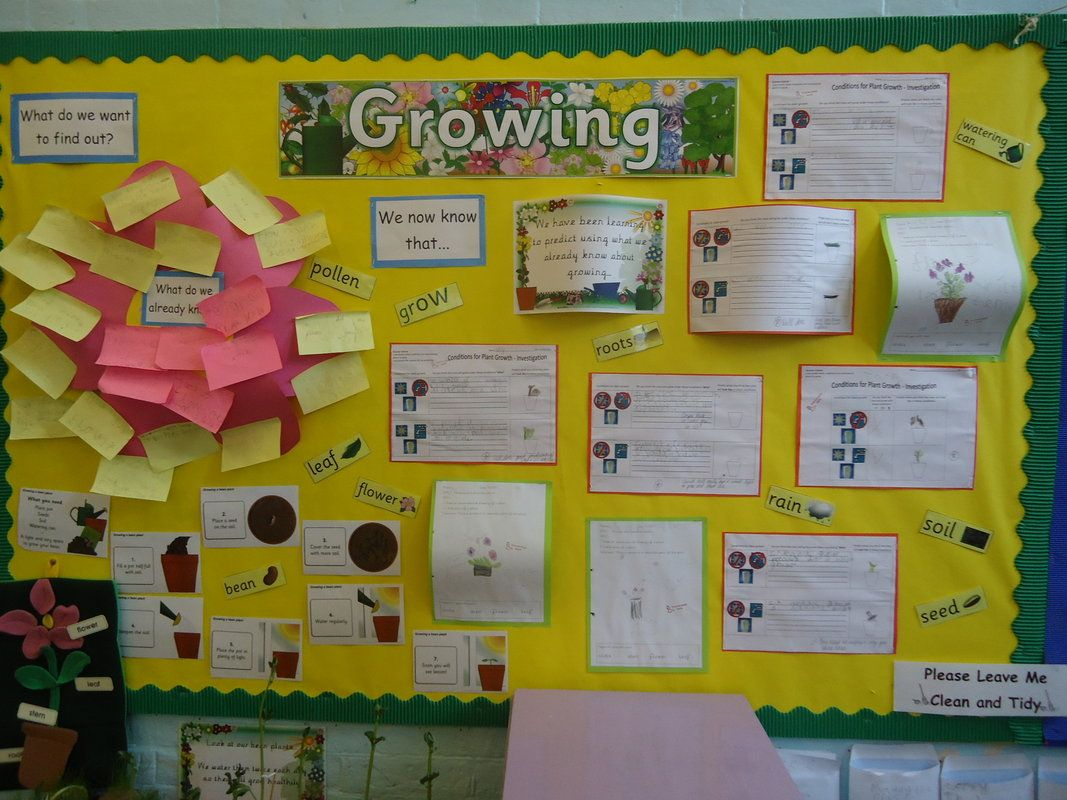 Plants Wall Display   My Classroom Ideas   Pinterest
