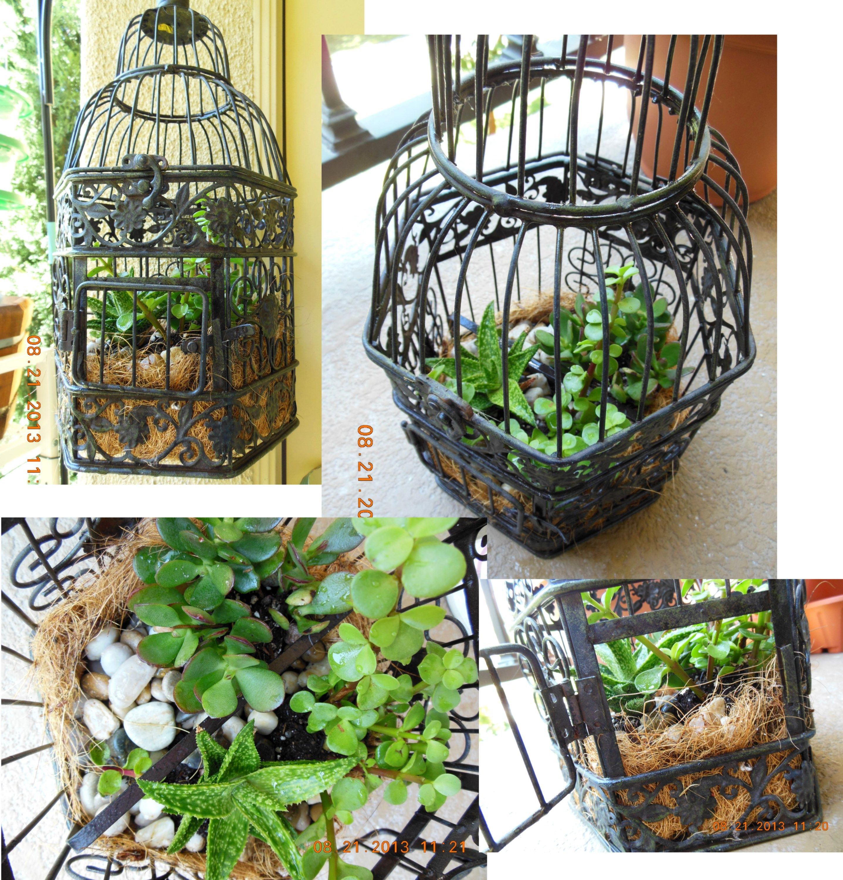 Minigarden in metal birdcage. Cage 6 at Ross department