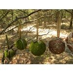 Moss Balls | Amazing gardens, Woodland decor, Live plants