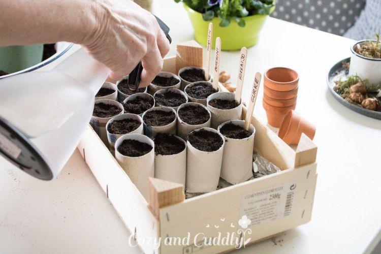 Photo of self-catering garden #garden #garten Gemsegarten: cultivation in toilet paper rolls -…
