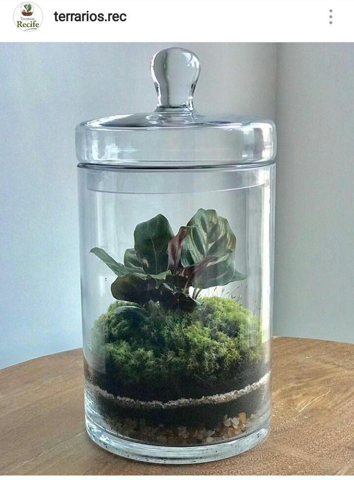 Pin By Rebecca Hargrove On Flora Pinterest Terrarium Plants And