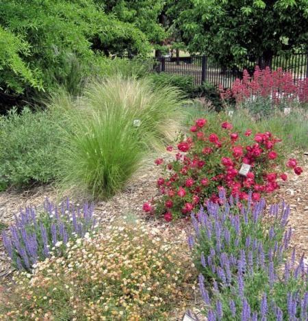 Spring In The Water Efficient Landscape Gardens Garden Design Native Plant Landscape California Native Garden