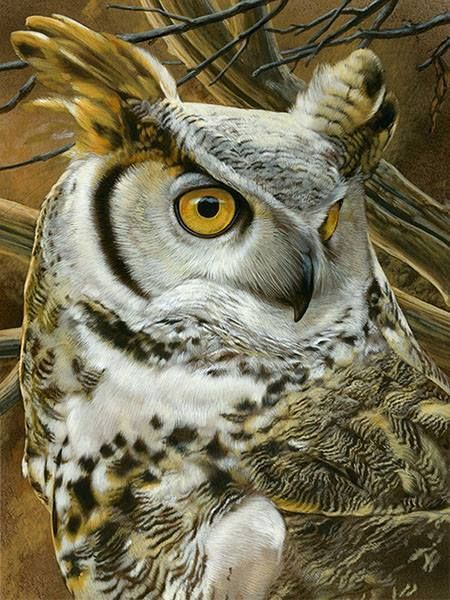 Pin Oleh Aries Adeksa Di Owl Di 2020 Lukisan Cat Air Burung Lukisan