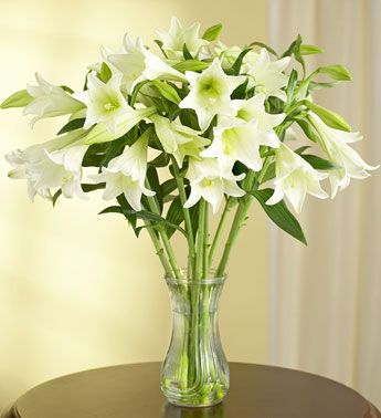 Easter Lilies In Vase Easter Lily Board Pinterest Flowers