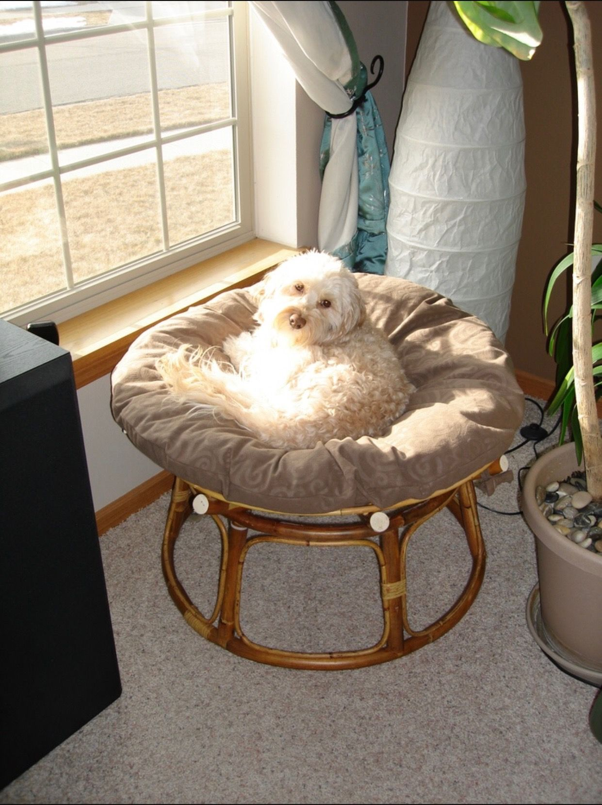 Handmade Dog Bed From A Papasan Chair Frame   Very Cute Owner!