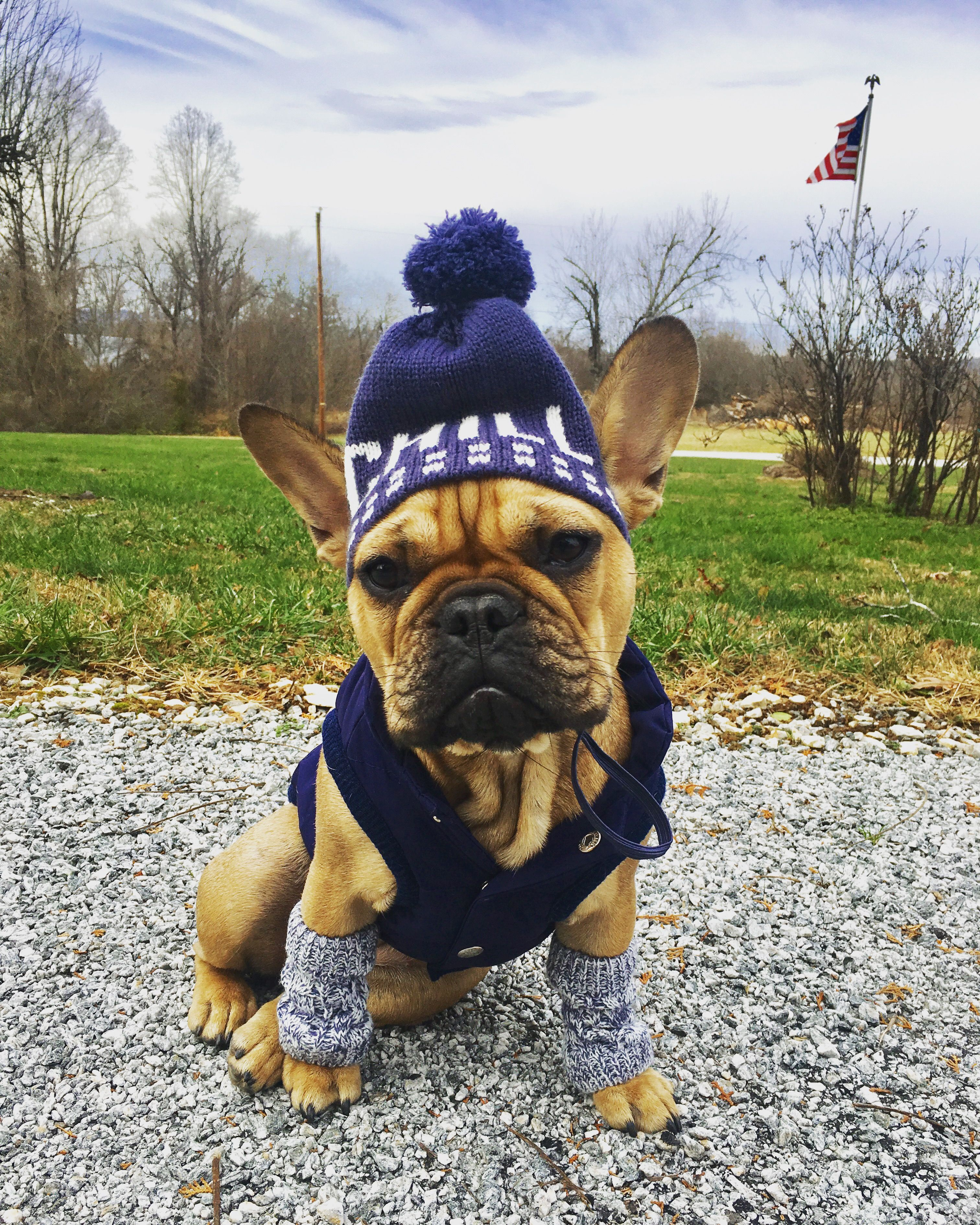 Frenchie In Chill Beanie And Leg Warmers Frenchie