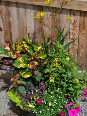 Tropical container with croton plants pinterest container gardening flowering plants and - Tropical container garden ...