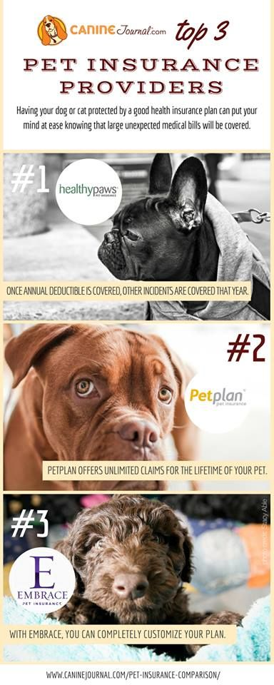 What S The Best Pet Insurance Company For 2020 Best Pet
