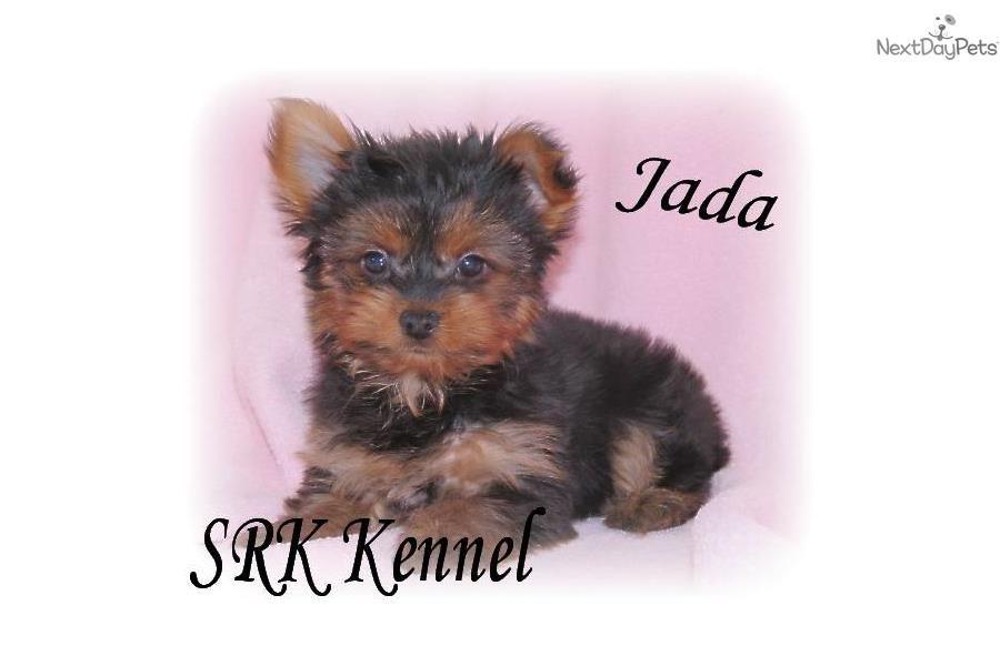 Teddy bear puppies for sale in dubuque iowa