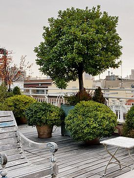 Arbre en pot pour la terrasse idees jardin pinterest for Arbre artificiel pour terrasse