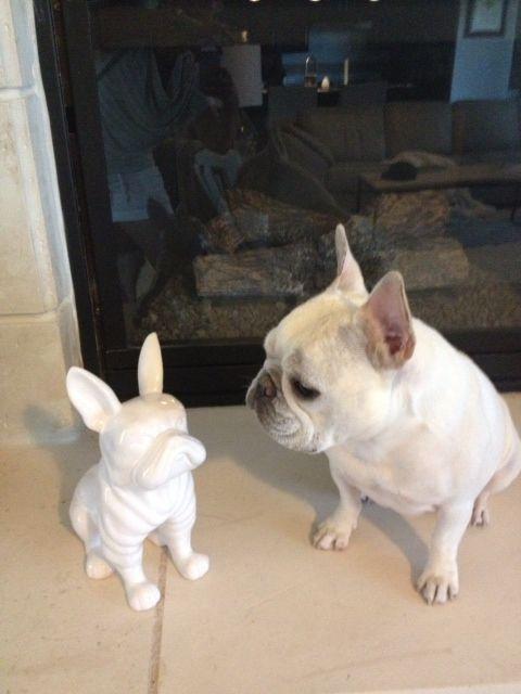 Zoe Just Met A New Friend ブルドッグ フレンチブルドッグ