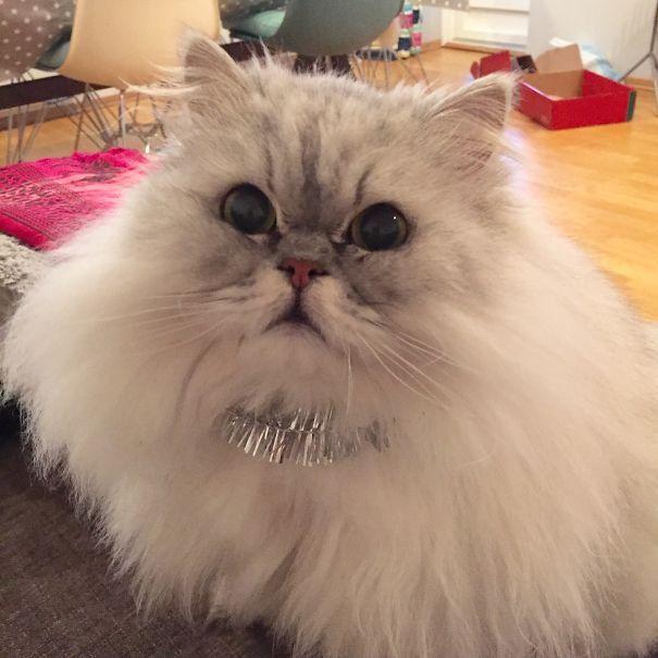 Коты, пушистость которых зашкаливает | Пушистый кот ...