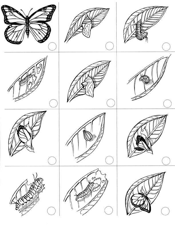Cycle De Vie Du Papillon En Flip Book à Imprimer λογικη