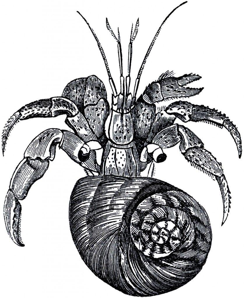 Free Hermit Crab Stock Images | Public domain | Crab ...