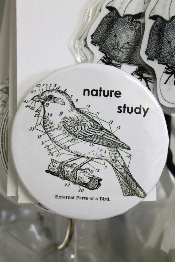 Pinback Button Bird Nature Lovers