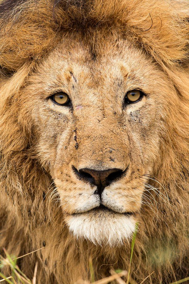King by Aziz Ahmed.