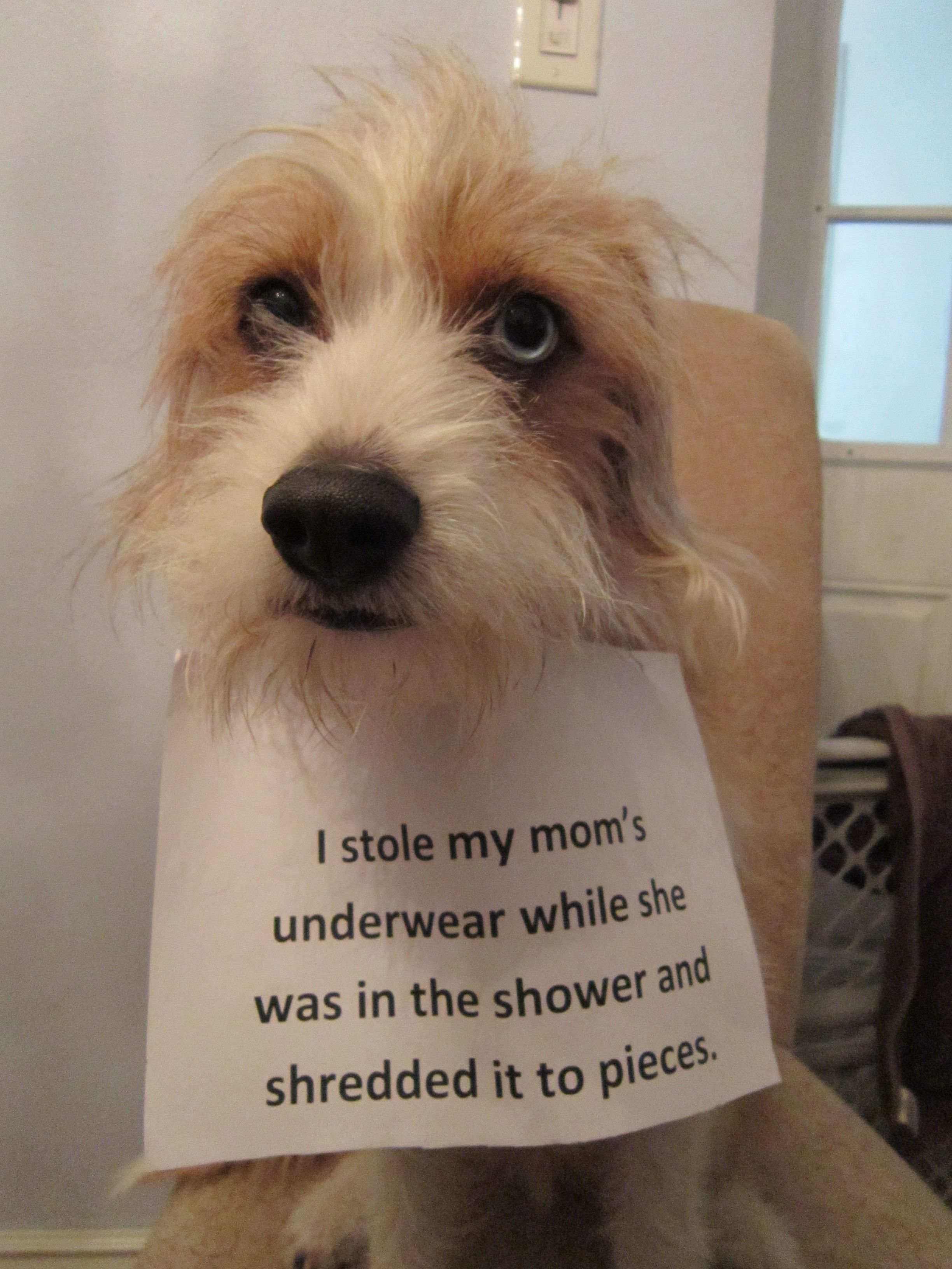 Stolen Goods With Images Dog Shaming Animal Shaming Funny