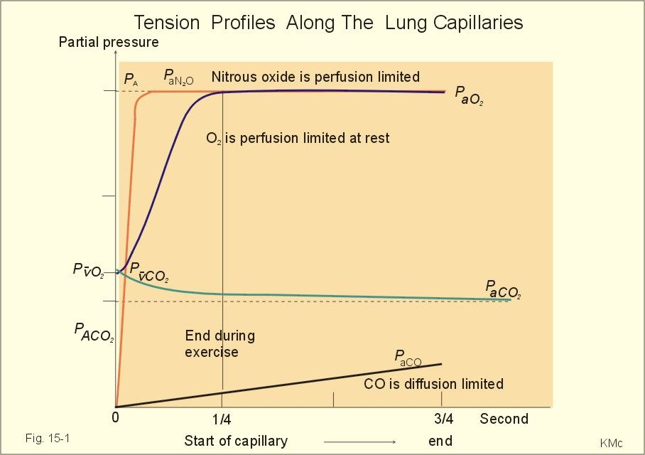 Diffusion-Perfusion Limitation | Primaries: Final Review | Pinterest
