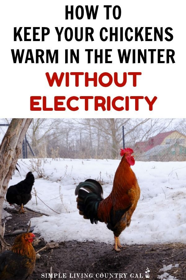 Tips On How To Keep Your Chickens Warm This Winter
