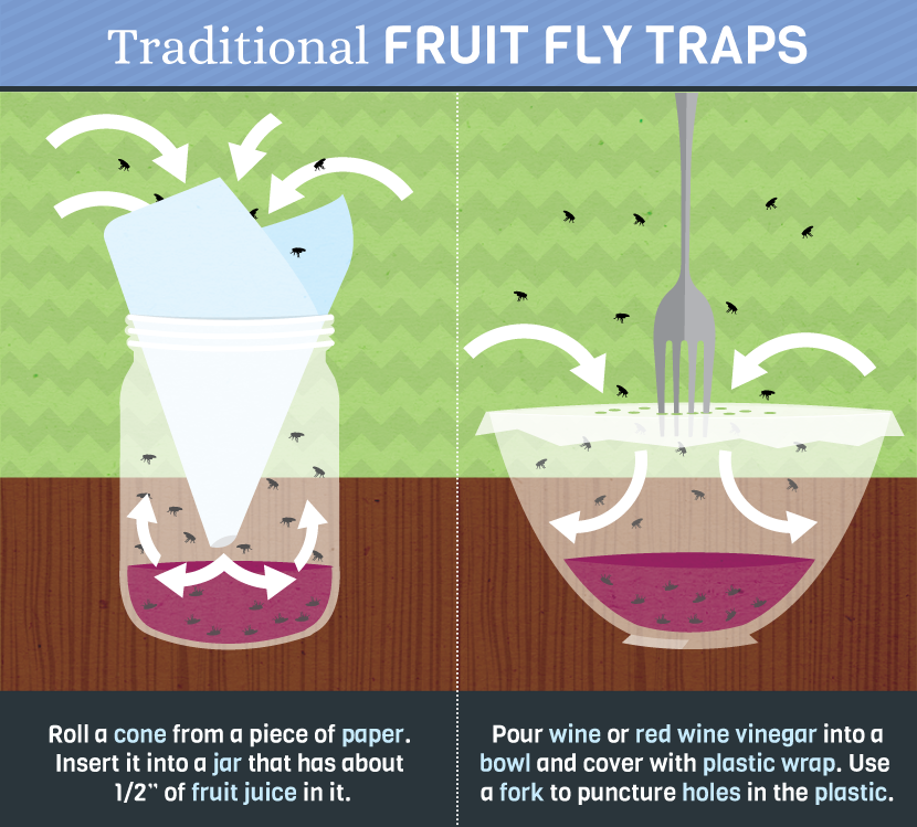 How To Really Get Rid Of Pesky Fruit Flies Fruit Fly Trap Fruit