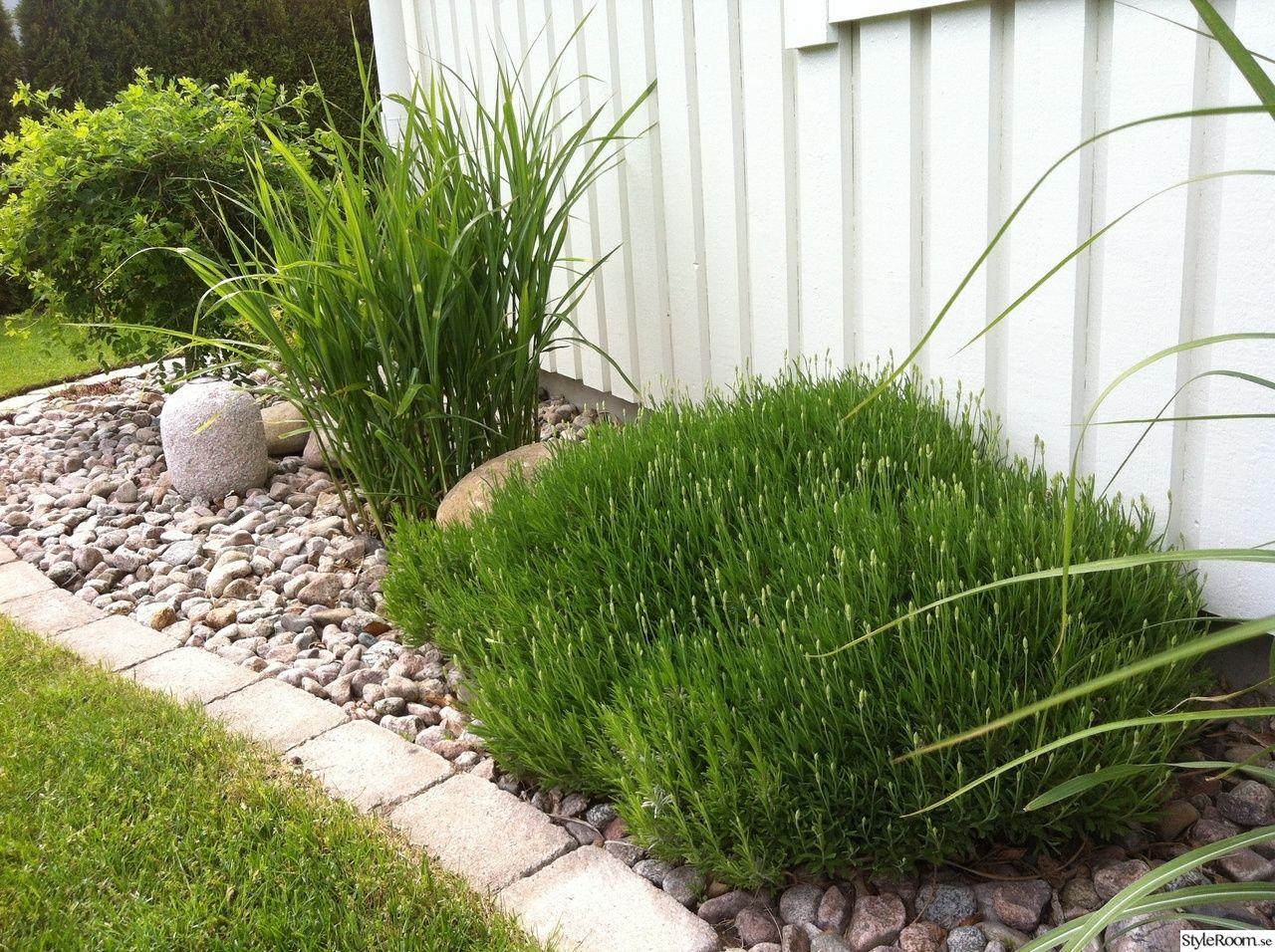 prydnadsgräs,lavendel,hängkaragan,stenar | Anlägga trädgård ...