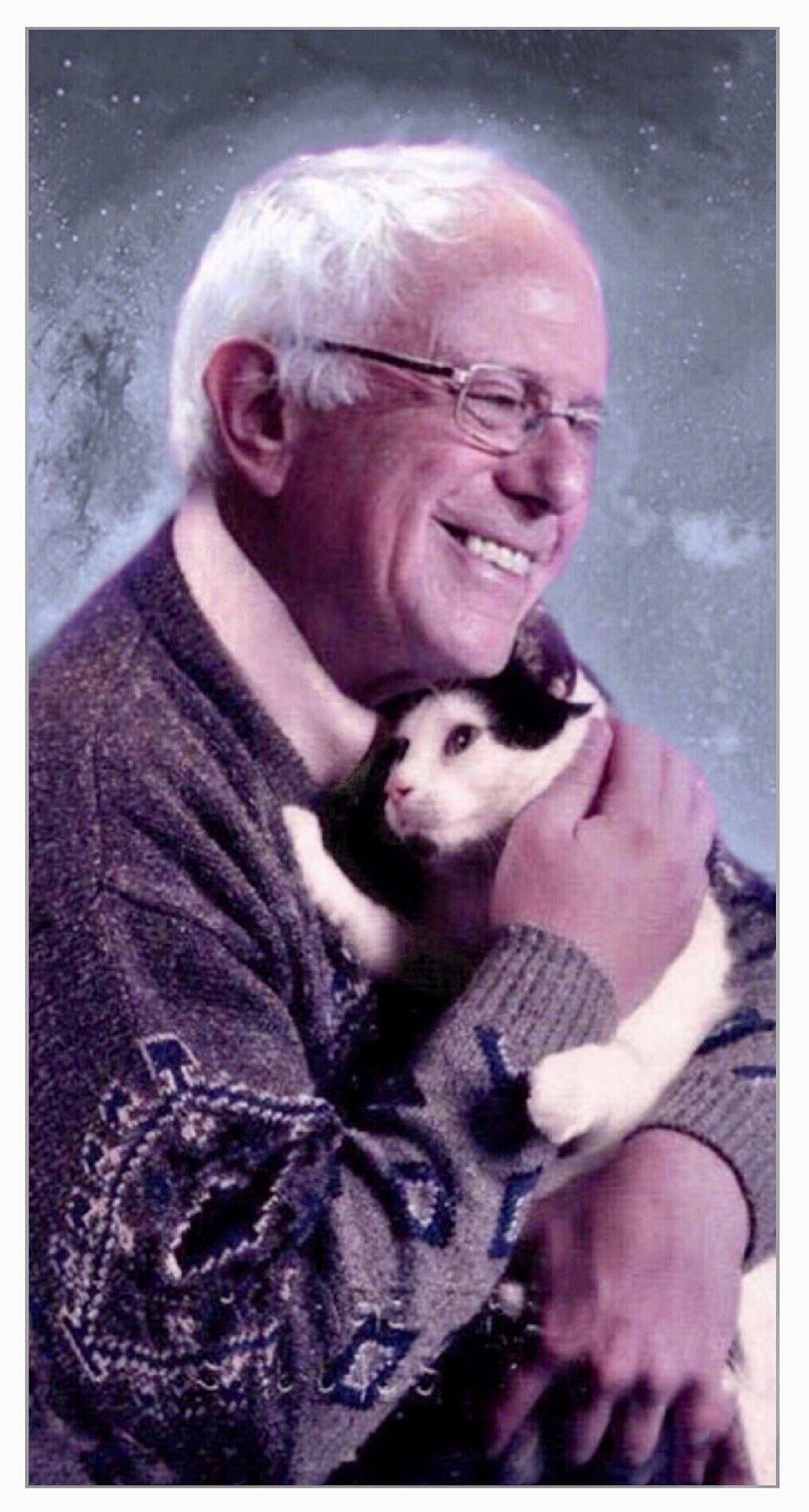 Bernie Sanders Men With Cats Cat People Cats