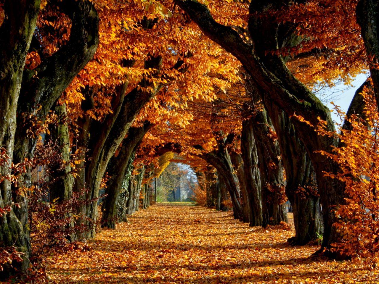 Herbst Bilder Avenue Hintergrundbilder Langzeitvektor Gold Bilder